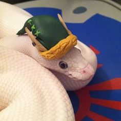 Best images, photos and pictures gallery about snakes with hats Snakes With Hats, Kinds Of Snakes, Baby Snakes, Best Small Pets, Snake Cages, Snake Party, Hissy Fit, Ball Python Morphs, Cute Snake