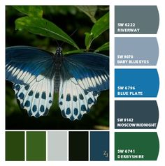 Instantly turn any picture into a palette with ColorSnap, created for you by Sherwin-Williams. Drawing Animals, Animal Drawings, Colour Combinations, Colour Schemes, Dark Blue Living Room, Pallet Painting, Blue Plates, Butterfly Art, Colour Palettes