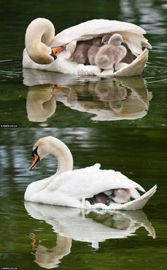Awww, that's a good momma.