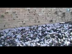 Thousands attend Priestly Blessing at the Western Wall Western Wall, Blessing, Worlds Largest, Israel, Eve, Mary, Faith, Community, Youtube