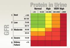Normal Protein Levels In Urine Kidney Disease, Bar Chart, Protein, Boss, Medical, Exercise, Health, Hair, Ejercicio
