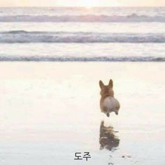 All About Playfull Pembroke Welsh Corgi Dgas corgi mix breeds Cute Corgi Puppy, Corgi Dog, Cute Puppies, Pet Dogs, Dogs And Puppies, Cute Baby Animals, Animals And Pets, Funny Animals, Pembroke Welsh Corgi Puppies