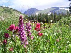 Flowers at Diamond Lake