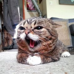 you is making me MAD!!!!!!!!!!!!!!!!!!!!!!!!!!!!!!!!!!!!!!!!!!!!!!!!!!!!!!!!!!!!!!!!!!!!!!!!