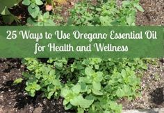 Oregano essential belongs in every first aid kit.