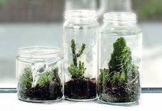 Resultado de imagen para mini jardines en recipientes de cristal