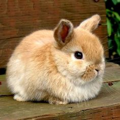 Baby Bunnies | 2nd place cutest baby rabbit | Rabbit Food Baby Bunnies, Cute Bunny, Bunny Rabbit, Cute Cats, Rabbit Food, Animals And Pets, Baby Animals, Funny Animals, Cute Animals