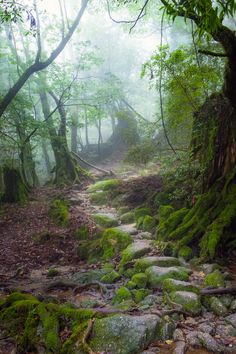 Misty forest path (no location given) by Debby Kwong