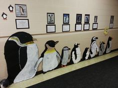 Penguin Species Wall Decor