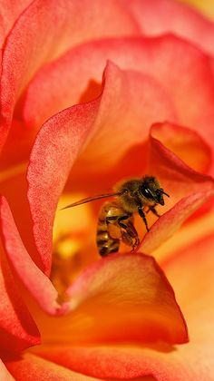 Bee Rosas | by Danny Perez Photography