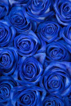 Pantone Colour Of The Year 2020 - Bon Bloemen Blue Flower Arrangements, Blue Flowers Bouquet, Royal Blue Flowers, Light Blue Flowers, Blue Wedding Flowers, Wedding Blue, Blue Roses Wallpaper, Vintage Wallpaper, Blue Wallpaper Iphone