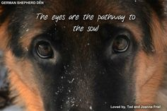 Every part of Brain Training for Dogs uses force-free training. Get Brain Training For Dogs by Adrienne Farricelli today at Off! Long Haired German Shepherd, Black German Shepherd Dog, German Shepherd Pictures, German Shepherd Puppies, German Shepherds, Animal Quotes, Dog Quotes, Best Dog Breeds, Best Dogs