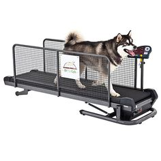 Professional Fit Fur Life Treadmill