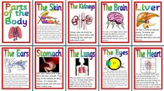 Science teaching resource, Parts of the Body, Human Anatomy printable posters for classroom display Ks2 Science, Teaching Science, Learning Activities, Classroom Posters, Classroom Displays, School Resources, Teaching Resources, Human Body Science, Kids Homework