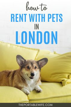 Moving to London soon? If you're moving to London with a dog or cat, you need to read these tips for how to find an apartment in London with pets. | Moving to the UK | London life | London expat blog | London life blog | Renting in London tips | How to move to London from US | London dogs | How to write a pet CV | How to move to London from Canada | Moving to London checklist | #london London Tips, London Photos, London Accommodation, Clapham Common, Rent In London, Pet Friendly Apartments, Moving To The Uk, London Property, Dogs Trust