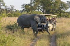 7 destinations for your 2020 travel bucket list - Independent. Tsitsikamma National Park, Winter Palace, Wildlife Safari, Game Reserve, Central Europe, Africa Travel, Best Cities, Adventure Awaits, Walking Tour