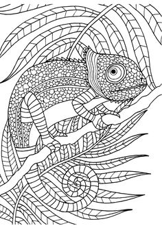 Reptile Coloring Pages - Free Printable | Dinosaur coloring pages ... | 333x236
