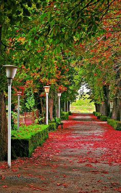 Beautiful Nature Wallpaper Of A Road With trees and red flowers