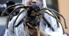 Cães e gatos fantasiados entram no clima do Halloween nas Filipinas - BOL Fotos - BOL Fotos