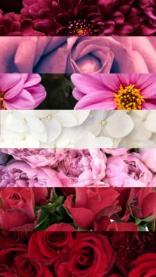 Pin By Safe Space Lgbtq On Lesbian Pride Flower Wallpaper