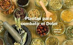 Vive Sana: Fitoterapia: Plantas medicinales para el Dolor. http://www.farmaciafrancesa.com/main.asp?Familia=189&Subfamilia=223&cerca=familia&pag=1