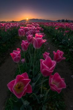 Sony III dynamic range improved, nearly matches chart-topping Nikon Beautiful Flowers Pictures, Flower Pictures, Pretty Flowers, Pink Flowers, Scenery Pictures, Amazing Nature, Land Scape, Beautiful Landscapes, Mother Nature