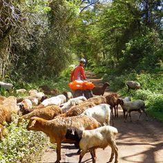 【mayu_elliot】さんのInstagramをピンしています。 《Traffic jam in the forest in Kenya... 森での微笑ましい渋滞。  #trafficjam#forest#kenya#animal#wildness#nomadic#bikewander#worldbybike#cycletouring#cycling#bicycle#adventure#offroad#explore#trip#旅#ケニア#自転車#チャリ旅#渋滞#森#オフロード#ノマド》