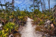Big Pine Key, Florida Keys Been down these paths a hundred times. Sometimes we'd see animal bones and derelict houses.