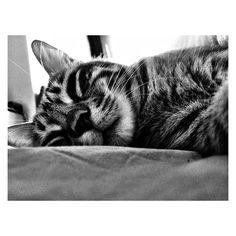"""Night night with Cheddar:)"""