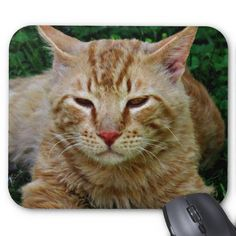 My cat Rudy on a mouse pad which you can purchase here. Just click on Rudy!