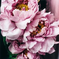 If I could just stare at peonies for an entire day...that would be a day well spent.