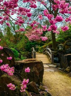 Image may contain: plant, flower, tree, outdoor and nature Beautiful Landscapes, Beautiful Gardens, Beautiful Flowers, Beautiful Places, Beautiful Pictures, Asian Garden, Garden Park, Garden Bridge, Nature Images