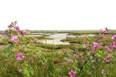 norfolk england uk | North Norfolk Coast All places Places to Stay Places to Eat Things to ...
