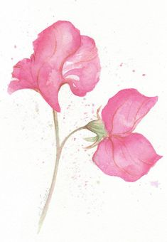 Pink Sweet Pea  original abstract watercolor painting by ChiFungW