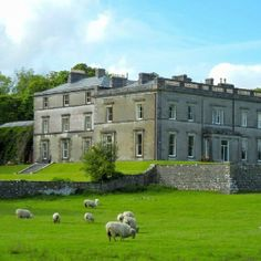 On of our several historic lodging choices with Templar ruins and sheep views for no additional fees!  County Sligo- IRE