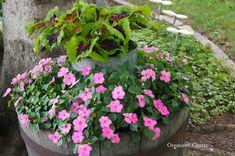 Pink impatiens and coleus l Organized Clutter: Junk Garden Tour 2014 Landscaping With Rocks, Outdoor Landscaping, Front Yard Landscaping, Landscaping Ideas, Outdoor Decor, Outdoor Living, Beautiful Flowers Garden, Amazing Flowers, Diy Flowers