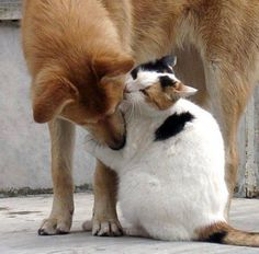 Cat loves this dog!