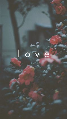 Beautiful iPhone Love wallpaper. #valentines @mobile9