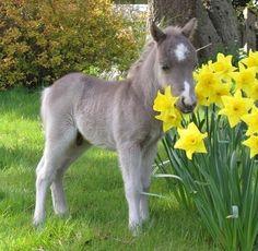 Mini pony love it