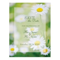 #savethedate #postcards - #Daisy Daisies Flower Floral Summer SAVE the Date Postcard