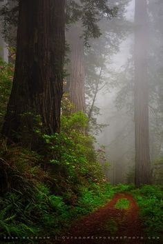 Deep in the redwoods (California) by Sean Bagshaw on 500px