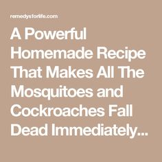 A Powerful Homemade Recipe That Makes All The Mosquitoes and Cockroaches Fall Dead Immediately! - Remedys For Life