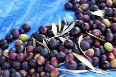 How to Cure Fresh Olives at Home Marinated Black Olives Recipe, Arbequina Olive Tree, Best Spinach Dip, Pickled Olives, Olive Brine, Olive Recipes, Food Hacks, Food Tips, Food Ideas