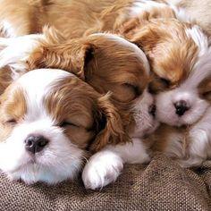 Die 103 Besten Bilder Von Die Sussesten Hunde In 2019 Hunde