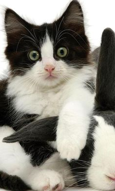 158 Best Cats Black White Images Cats Crazy Cats Cats And Kittens