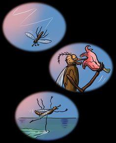 Journée type d'un moustique.