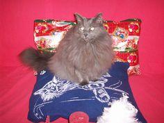 Perfekta julklappen! Den revolutionerande saccosäcken till katter! Bamse älskar den. Beställ på www.katt4you.se