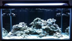 Aquascaping, Show your Skills... - Page 26 - Reef Central Online Community