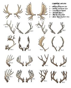 deer antler branching pattern - Google Search