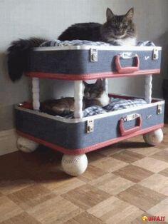 Foto divertente: Come fare una casetta per gatti con una vecchia valigia
